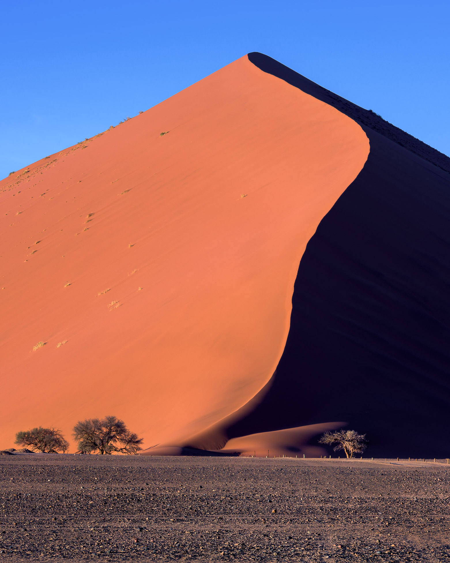Big Daddy Dune of Sossusvlei in the Morning, Namib-Naukluft Park, Namibia