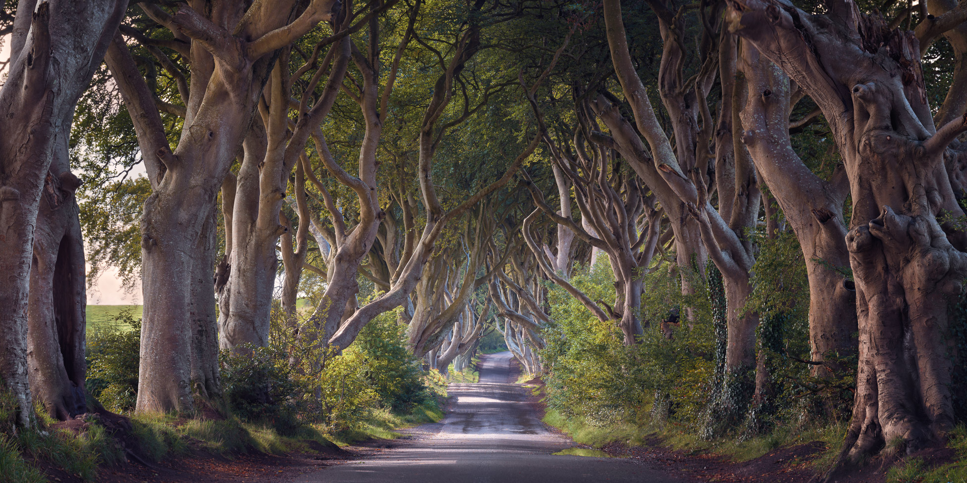 Panorama of Dark Hedges in the Morning, Northern Ireland, United Kingdom